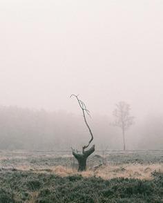 Photographer Spotlight: Sonia Perdeck – BOOOOOOOM! – CREATE * INSPIRE * COMMUNITY * ART * DESIGN * MUSIC * FILM * PHOTO * PROJECTS