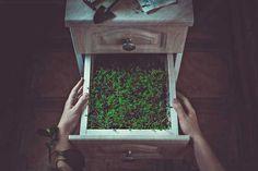 Still Life Photography by Dina Belenko #inspiration #photography #still #life
