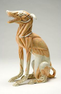 Masao Kinoshita's Sculptures Play With Exaggerated Anatomy | Hi-Fructose Magazine #muscle #sculpture #skeleton #biology #canine #design #anatomy #exaggerated #dissected #art #pet #dog