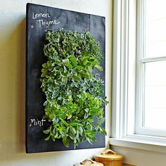 GroVert Chalkboard Wall Planter