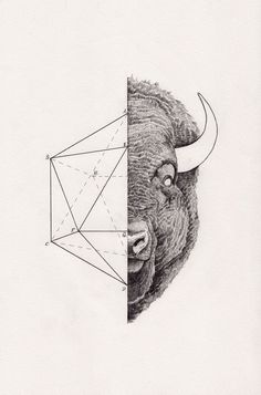Icosabison by Peter Carrington #illustration #inspiration #geometry #science