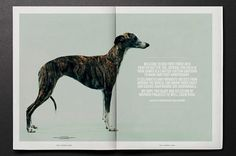 Fourandsons_p0203_intro #whippet #canine #design #graphic #greyhound #photography #animal #dog