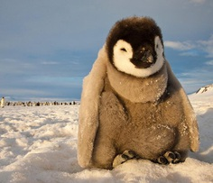 Animals in Antarctica: Paul Nicklen Documents The Ice and Wildlife of The Polar Regions