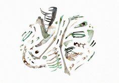 Birds & Bones on Behance #skeleton #ribs #birds #skull #bones #collage