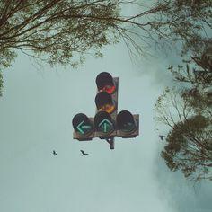 Beginning of the way. #birds #fly #manipulation #riazhassan