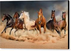 Gorgeous Horses Canvas Print featuring the digital art Horses Group by Engy Khalil