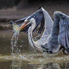 Amazing Bird Photography by Johnson Chua