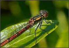 Macro Photography by Rob van der Waal | Professional Photography Blog #inspiration #photography #macro