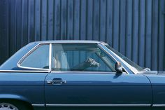 Maus #waiting #photo #blue #car #dog