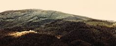 mai11_08.jpg (JPEG-Grafik, 1024x410 Pixel) #pach #jochen #retro #black #sundown #wood #forest #trees