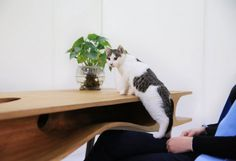 With CATable, a table for you and your cat, sharing your desk is fun as your cat busily explores the table while you work! #product #furniture #design #industrial