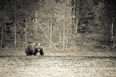 Animals Photography by Kimmo Savolainen