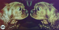 Joseph R Marritt #dogs