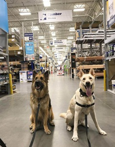 Most Dog Friendly Stores in America - Lowes