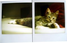 nermal | Flickr - Photo Sharing! #photo #collaboration #polaroid