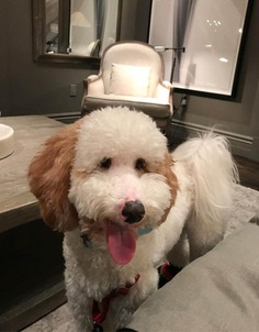 Most Dog Friendly Stores in America - Restoration Hardware