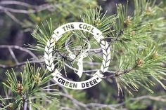 The Cool Green Deer - Videoclip - Carlosbull | Diseño Gráfico y fotografía @ Logroño, Spain :: Carlos de Toro Hernando #deer #design #graphic #bokeh #wood #video #photography #videoclip #logo #forest #cool