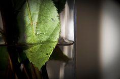 Leaf #nature