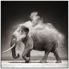 FFFFOUND! | 9 Elephant With Exploding Dust (JPEG Image, 884x884 pixels) - Scaled (70%) #elephant