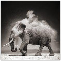 FFFFOUND! | 9 Elephant With Exploding Dust (JPEG Image, 884x884 pixels) - Scaled (70%)