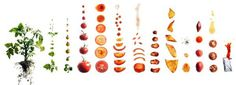 food photography maren caruso 3 #ingredients #photography #conceptual #food