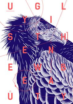 About: #poster #bird #typo #beauty #ugly