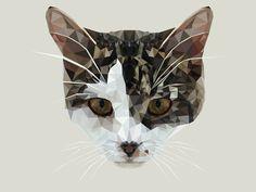 STELLA #kitten #vector #hopelittle #cat #illustration #triangle