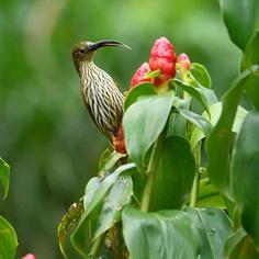 #birdsofinstagram: Beautiful Birds Photography by Rathika Ramasamy
