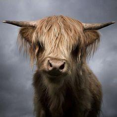 Animal Photography by David Boni | Professional Photography Blog #inspiration #photography #animal