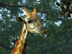 Animal Photography by Quazi Ahmed Hussain | Professional Photography Blog #inspiration #photography #animal