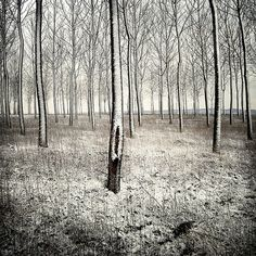 Woods #woods #snow #photography #minimal #trees
