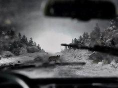 FFFFOUND! | DETHJUNKIE* #wolf