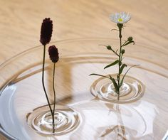 Floating Ripple Vases From OODesign #gadget