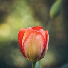 #instaflower: Beautiful Flower Photography by Marie Rich