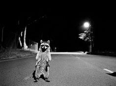 FOTO DEL DÍA #animal