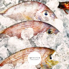 Cold Storage #pattern #storage #cold #fish #food #art