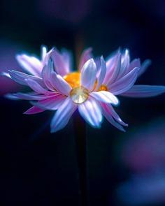#splendid_flowers: Beautiful Flowers Photography by Hege Odegard