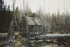 B L O O D A N D C H A M P A G N E . C O M: #cabin #woods