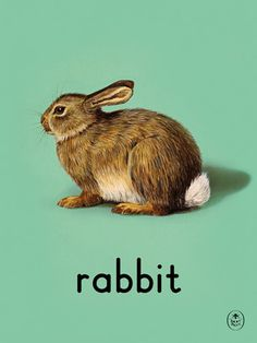 rabbit Art Print by Ladybird Books Easyart.com