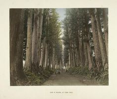 All sizes | View of Imaichi, at Nikko Road | Flickr - Photo Sharing! #trees #forest #japan