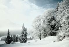 Winterlandschaft » pulswerk » Fotografie » Vernissage » Supertopic #trees #pulswerk #snow #winter