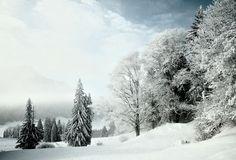 Winterlandschaft » pulswerk » Fotografie » Vernissage » Supertopic #winter #snow #trees #pulswerk