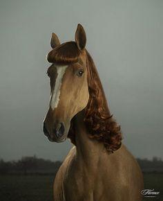 Julian Wolkenstein - BOOOOOOOM! - CREATE * INSPIRE * COMMUNITY * ART * DESIGN * MUSIC * FILM * PHOTO * PROJECTS #photography #horse