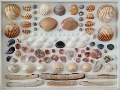 SUBMISSION: Shells by Stephanie Viets #organized #summer
