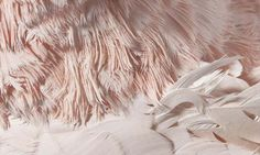 Birds | The Bird Book #pink #photo #feathers #bird #zoom
