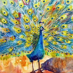 Peacock #peacock