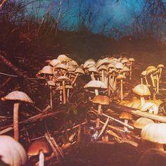 Mushroom #mushroom #nature #denmark