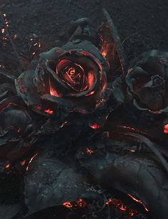 flower, magma, lava, rose
