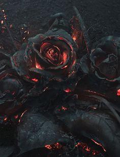 flower, magma, lava, rose