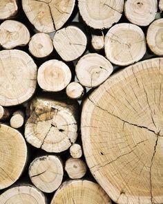 antonia magdalena #wood